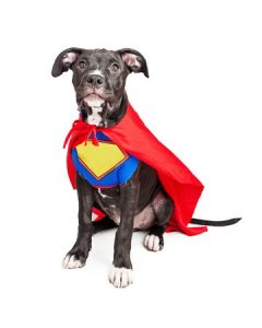 Sitting dog in superhero outfit with cape