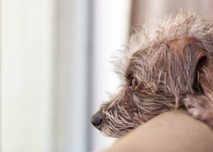 How to Help Your Dog Cope with Separation Anxiety