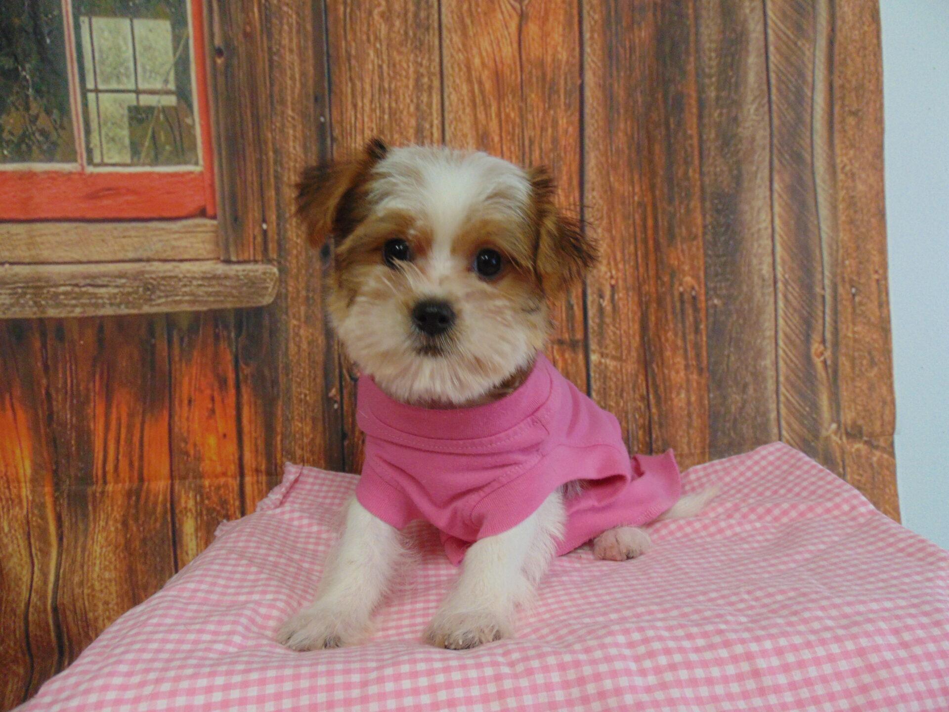 Pet Store Fredericksburg VA: Puppies & Dogs for Sale