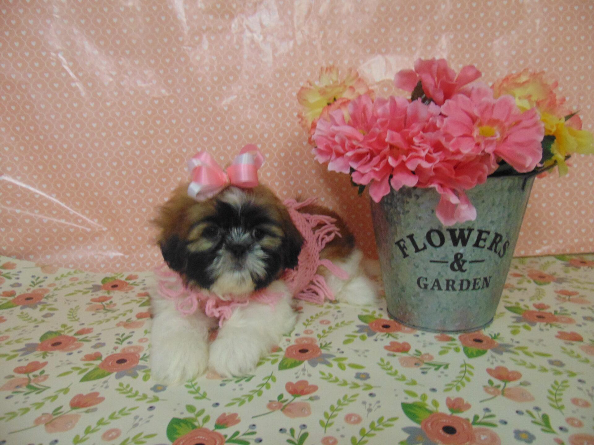 Puppy store in virginia : Silver 7 las vegas