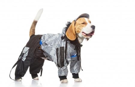 Should I Dress Up My Pauley's Pup?