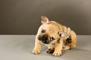 Dog Owner Tips