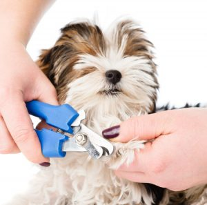 Grooming Services in Ashland VA