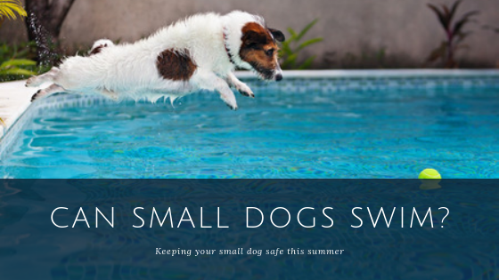 Can Small Dogs Swim?