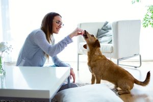 How to Care for Your Dog During the COVID-19 Outbreak