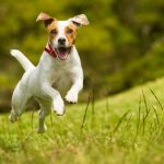 How Much Exercise Do Small Dogs Need?